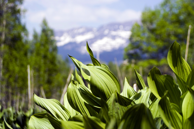 PaulaCombs_PhotoCombs_CrestedButte2