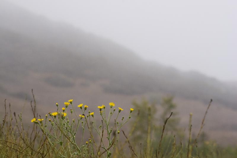 Paula L. Combs Photo Combs Santa Monica Mountains 3